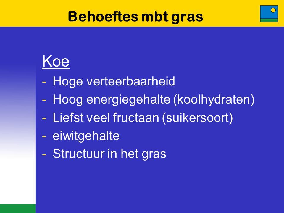 Behoeftes mbt gras Koe -Hoge verteerbaarheid -Hoog energiegehalte (koolhydraten) -Liefst veel fructaan (suikersoort) -eiwitgehalte -Structuur in het g
