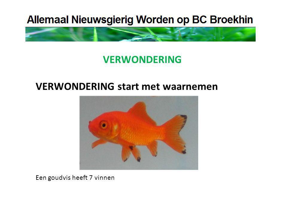 VERWONDERING VERWONDERING start met waarnemen Een goudvis heeft 7 vinnen