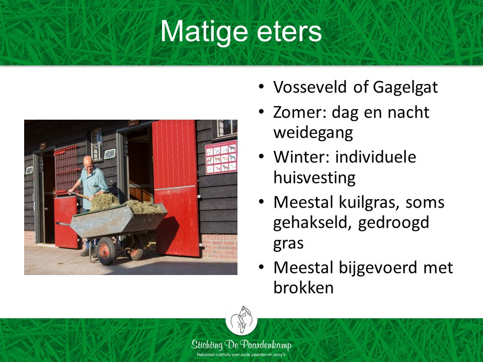 Matige eters Vosseveld of Gagelgat Zomer: dag en nacht weidegang Winter: individuele huisvesting Meestal kuilgras, soms gehakseld, gedroogd gras Meest