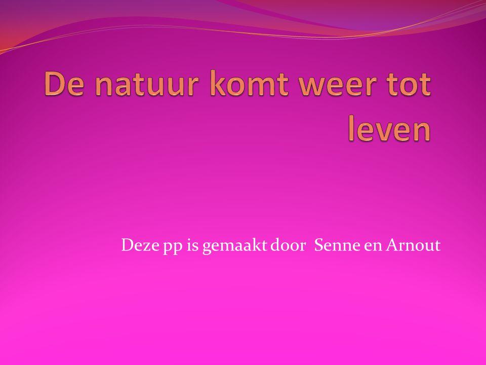 Deze pp is gemaakt door Senne en Arnout