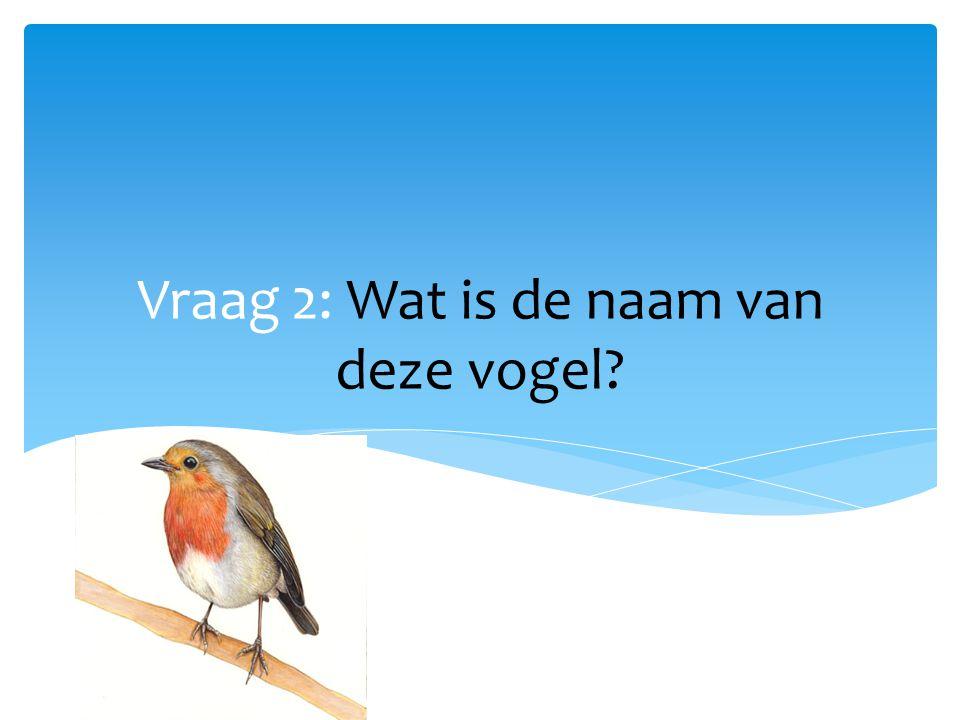 Vraag 2: Wat is de naam van deze vogel