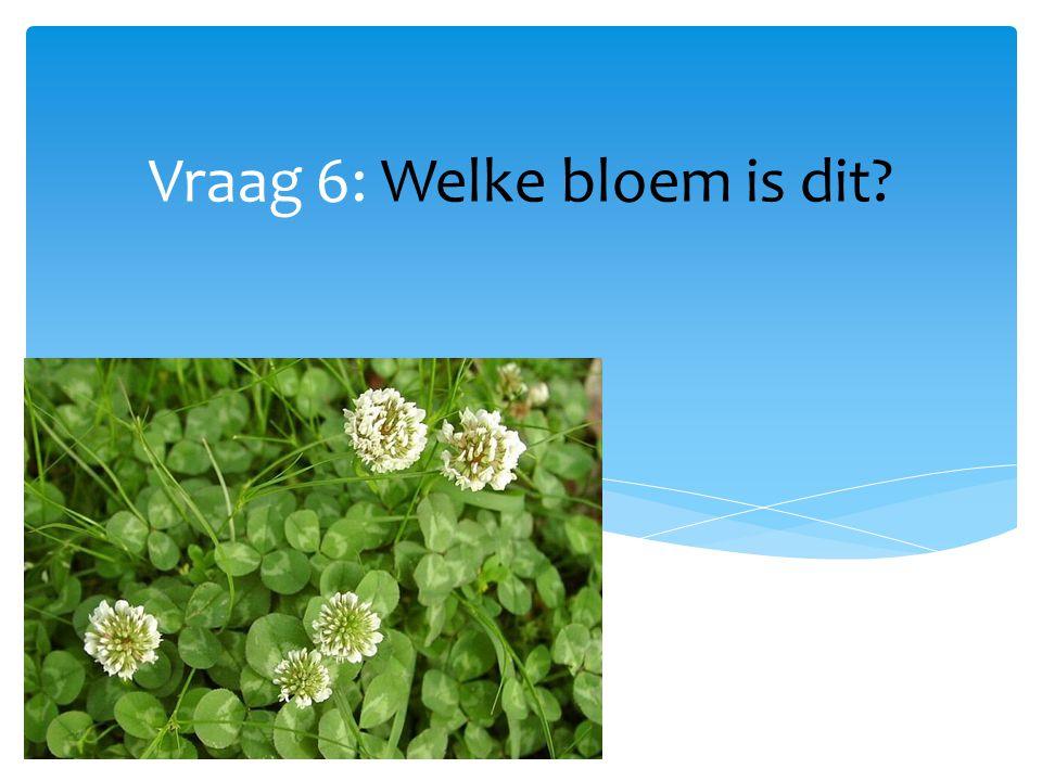 Vraag 6: Welke bloem is dit