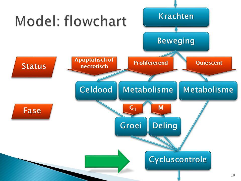 KrachtenKrachten BewegingBeweging MetabolismeMetabolisme CycluscontroleCycluscontrole StatusStatus FaseFase CeldoodCeldoodMetabolismeMetabolisme GroeiGroeiDelingDeling Apoptotisch of necrotisch G1G1G1G1 G1G1G1G1MM 10 ProlifererendProlifererendQuiescentQuiescent