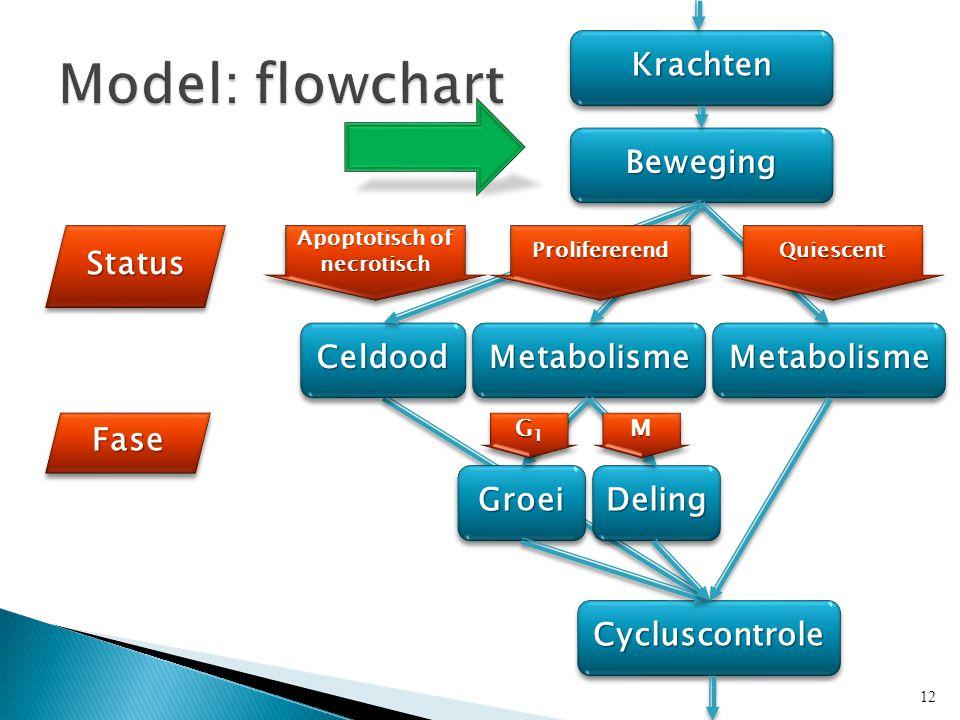 KrachtenKrachten BewegingBeweging MetabolismeMetabolisme CycluscontroleCycluscontrole StatusStatus FaseFase CeldoodCeldoodMetabolismeMetabolisme GroeiGroeiDelingDeling Apoptotisch of necrotisch G1G1G1G1 G1G1G1G1MM 12 ProlifererendProlifererendQuiescentQuiescent