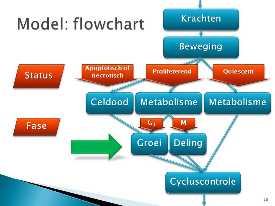 KrachtenKrachten BewegingBeweging MetabolismeMetabolisme CycluscontroleCycluscontrole StatusStatus FaseFase CeldoodCeldoodMetabolismeMetabolisme GroeiGroeiDelingDeling Apoptotisch of necrotisch G1G1G1G1 G1G1G1G1MM 18 ProlifererendProlifererendQuiescentQuiescent
