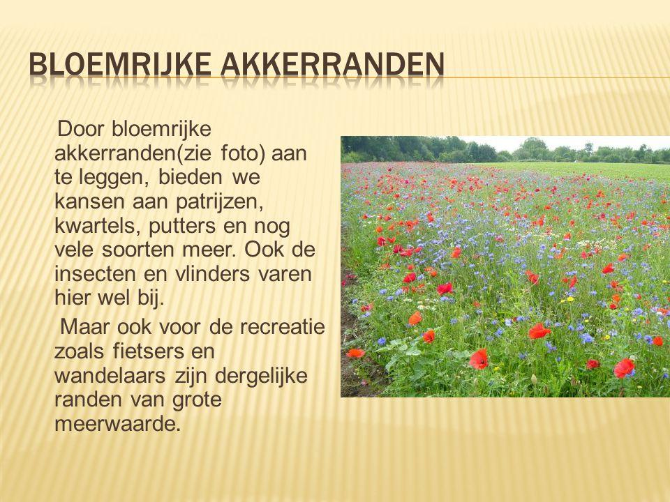 Door bloemrijke akkerranden(zie foto) aan te leggen, bieden we kansen aan patrijzen, kwartels, putters en nog vele soorten meer. Ook de insecten en vl