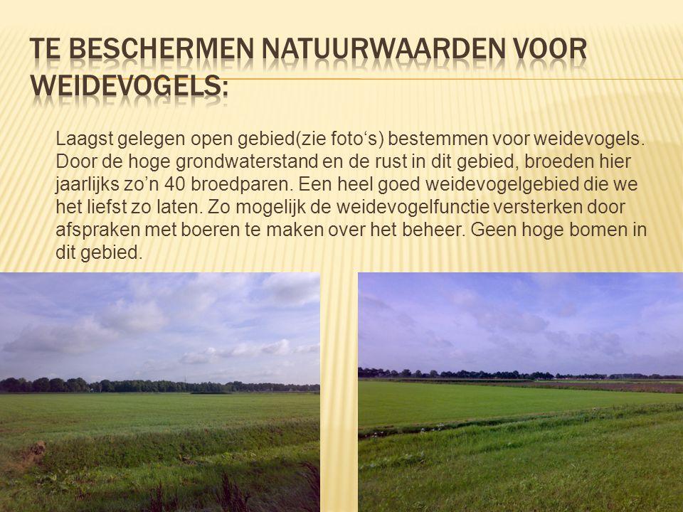 Laagst gelegen open gebied(zie foto's) bestemmen voor weidevogels. Door de hoge grondwaterstand en de rust in dit gebied, broeden hier jaarlijks zo'n