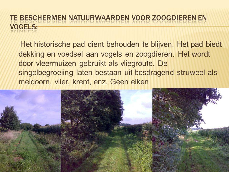 Het historische pad dient behouden te blijven. Het pad biedt dekking en voedsel aan vogels en zoogdieren. Het wordt door vleermuizen gebruikt als vlie