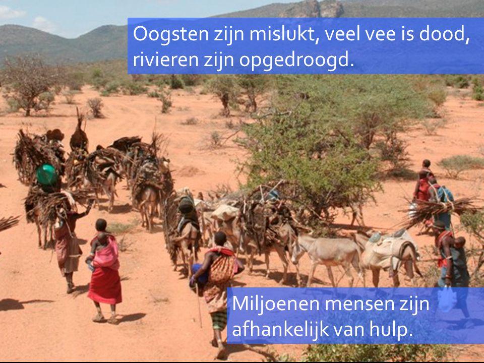 Miljoenen mensen zijn afhankelijk van hulp. Oogsten zijn mislukt, veel vee is dood, rivieren zijn opgedroogd.