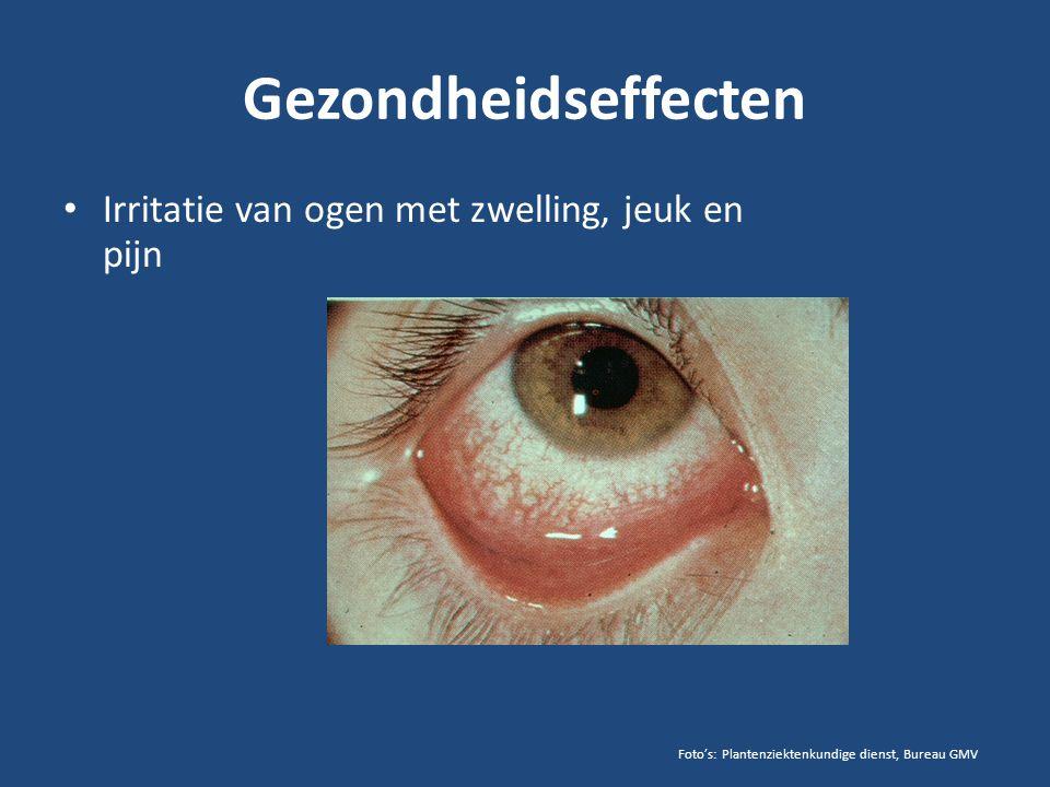 Gezondheidseffecten Irritatie van ogen met zwelling, jeuk en pijn Foto's: Plantenziektenkundige dienst, Bureau GMV