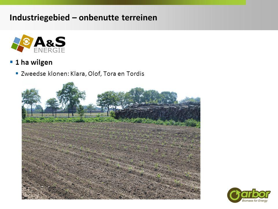 1 ha wilgen  Zweedse klonen: Klara, Olof, Tora en Tordis Industriegebied – onbenutte terreinen
