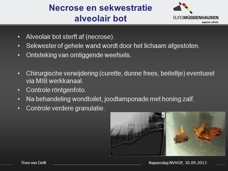 Theo van Delft Najaarsdag NVVGP, 30.09.2013 Necrose en sekwestratie alveolair bot Alveolair bot sterft af (necrose). Sekwester of gehele wand wordt do