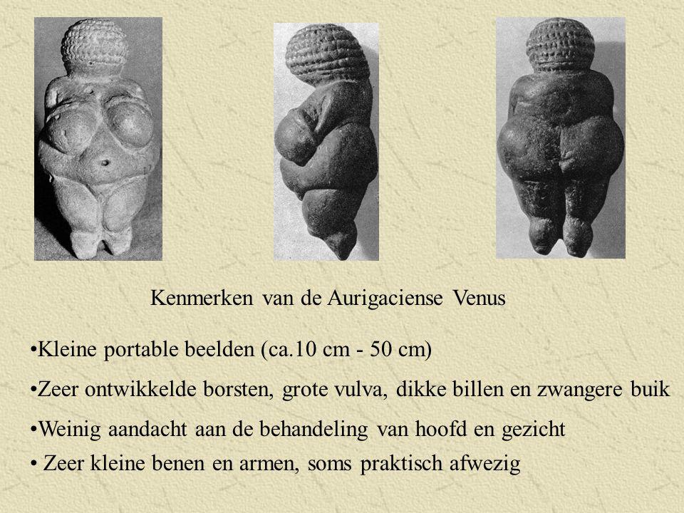 Kenmerken van de Aurigaciense Venus Zeer ontwikkelde borsten, grote vulva, dikke billen en zwangere buik Weinig aandacht aan de behandeling van hoofd