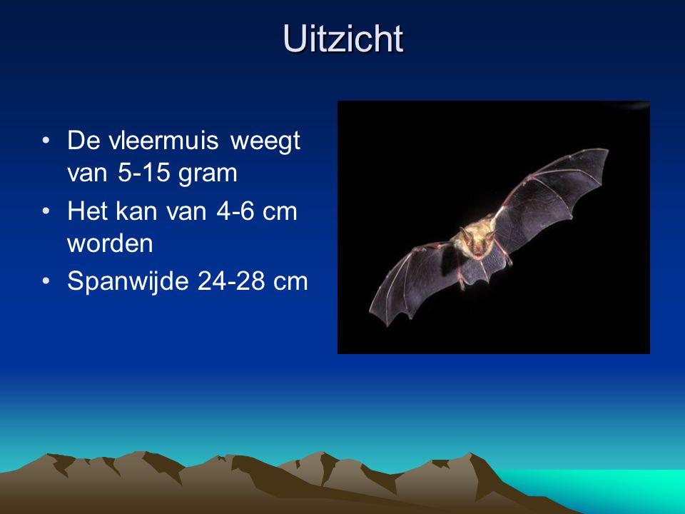 Uitzicht De vleermuis weegt van 5-15 gram Het kan van 4-6 cm worden Spanwijde 24-28 cm