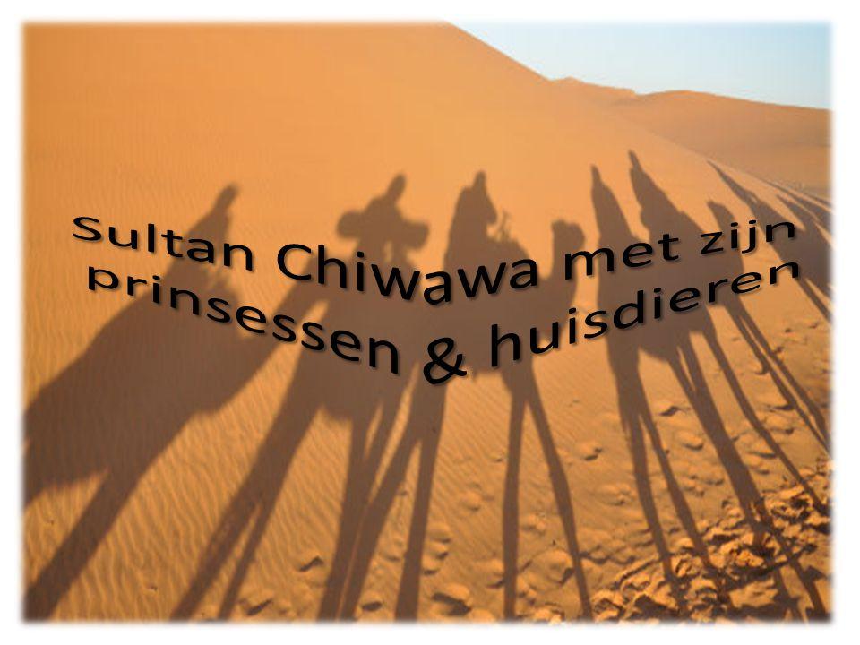 Er was eens een sultan Chiwawa.Hij leefde in Patoeland.