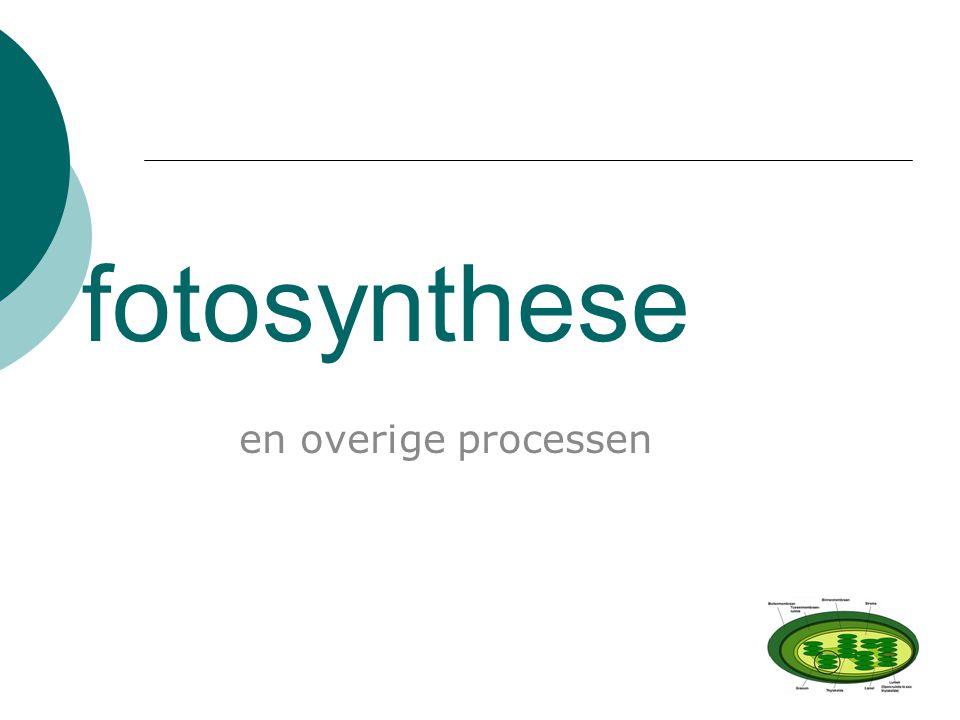 fotosynthese en overige processen