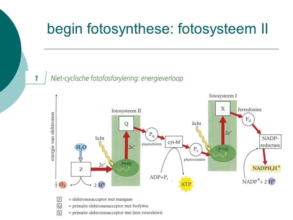 begin fotosynthese: fotosysteem II