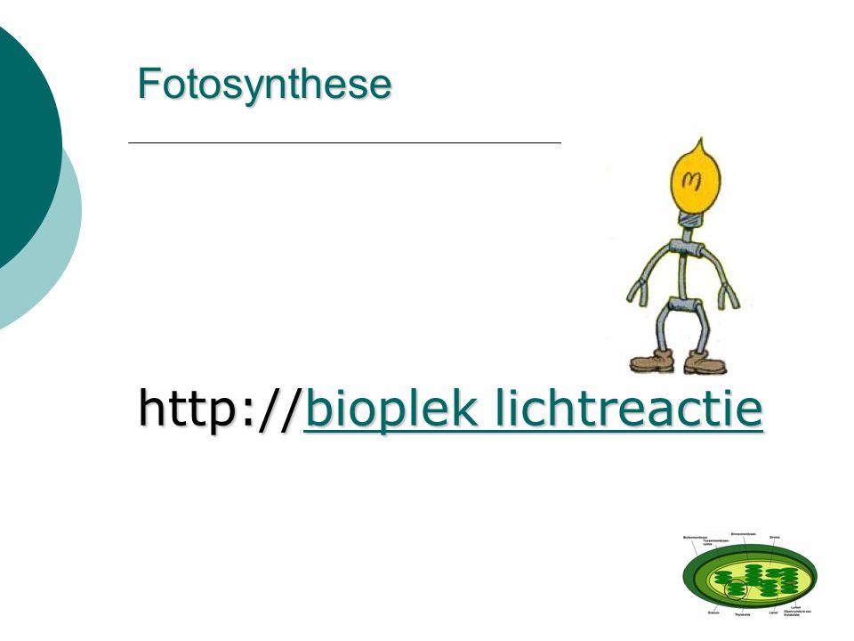 Fotosynthese http://bioplek lichtreactie bioplek lichtreactiebioplek lichtreactie