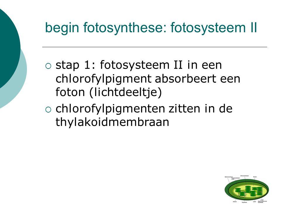  stap 1: fotosysteem II in een chlorofylpigment absorbeert een foton (lichtdeeltje)  chlorofylpigmenten zitten in de thylakoidmembraan