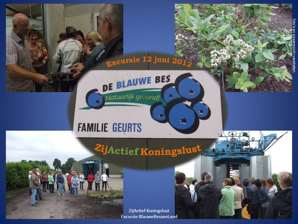 Fotoalbum door Verstraten foto's en powerpoint r.verstraten 12-6-20121 ZijActief Koningslust Excursie BlauweBessenLand