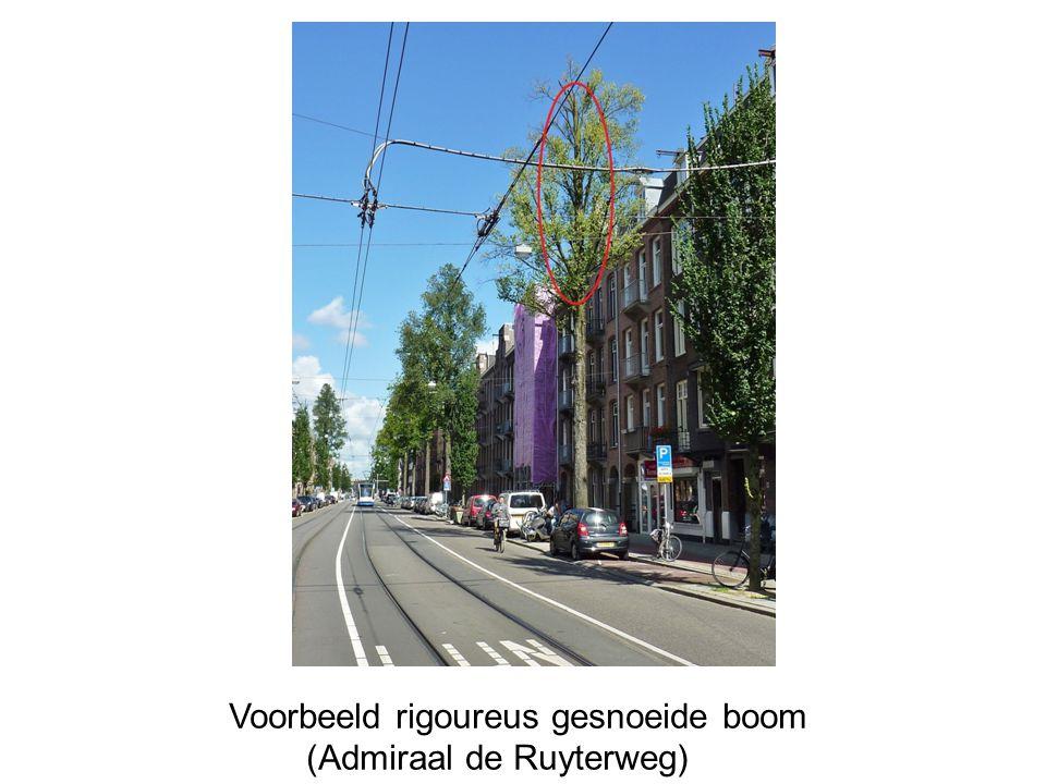 Voorbeeld rigoureus gesnoeide boom (Admiraal de Ruyterweg)