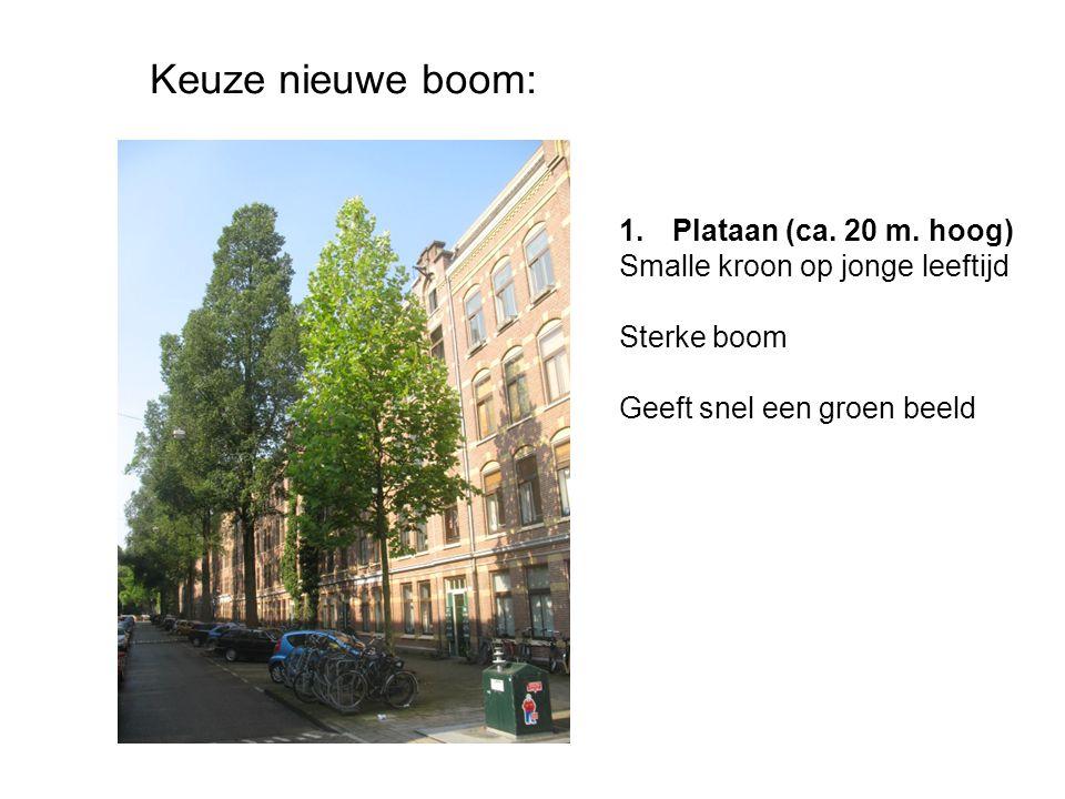 Keuze nieuwe boom: 1.Plataan (ca. 20 m.