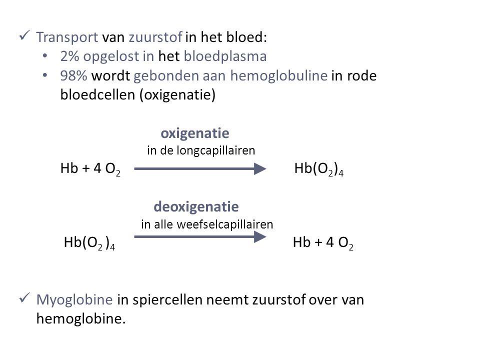 Transport van zuurstof in het bloed: 2% opgelost in het bloedplasma 98% wordt gebonden aan hemoglobuline in rode bloedcellen (oxigenatie) oxigenatie in de longcapillairen Hb + 4 O 2 Hb(O 2 ) 4 deoxigenatie in alle weefselcapillairen Hb(O 2 ) 4 Hb + 4 O 2 Myoglobine in spiercellen neemt zuurstof over van hemoglobine.