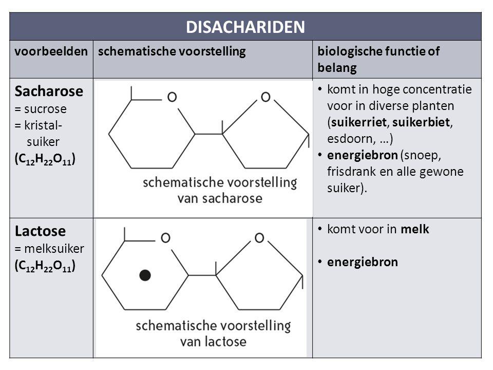 DISACHARIDEN voorbeeldenschematische voorstellingbiologische functie of belang Sacharose = sucrose = kristal- suiker (C 12 H 22 O 11 ) komt in hoge concentratie voor in diverse planten (suikerriet, suikerbiet, esdoorn, …) energiebron (snoep, frisdrank en alle gewone suiker).