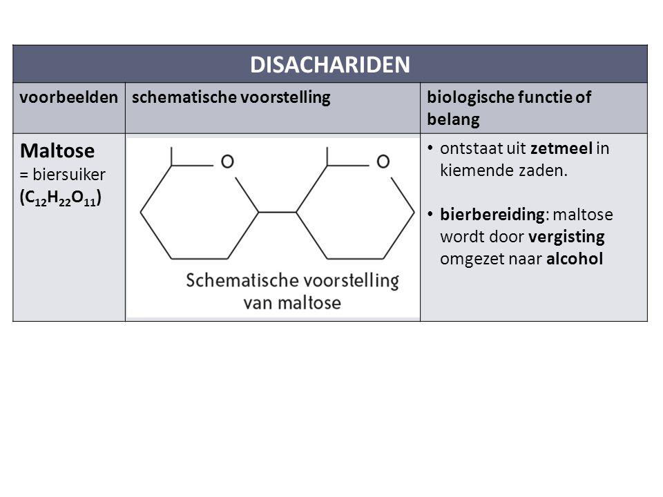 DISACHARIDEN voorbeeldenschematische voorstellingbiologische functie of belang Maltose = biersuiker (C 12 H 22 O 11 ) ontstaat uit zetmeel in kiemende zaden.