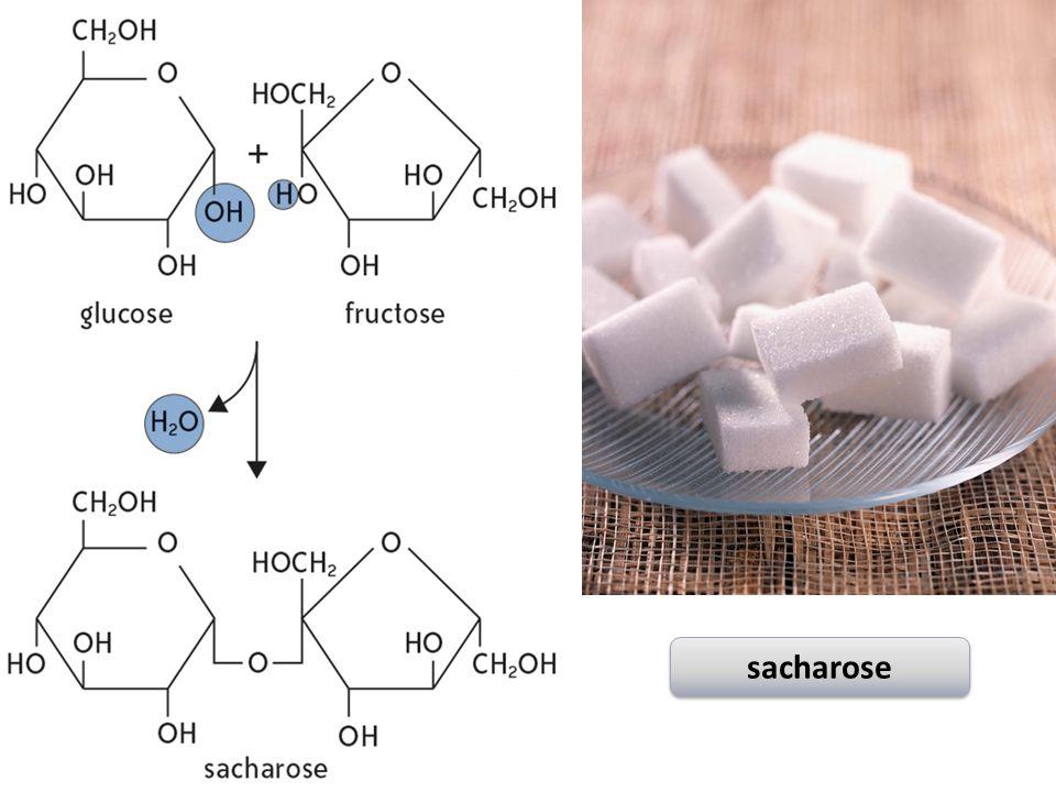 sacharose
