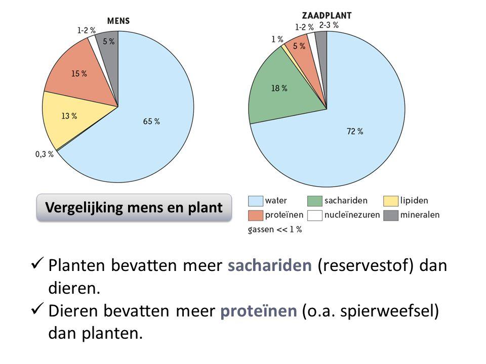Planten bevatten meer sachariden (reservestof) dan dieren.