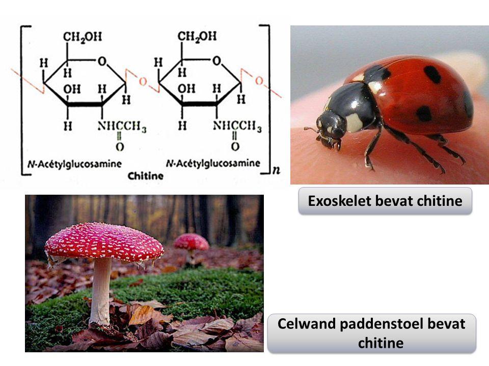 Celwand paddenstoel bevat chitine Exoskelet bevat chitine