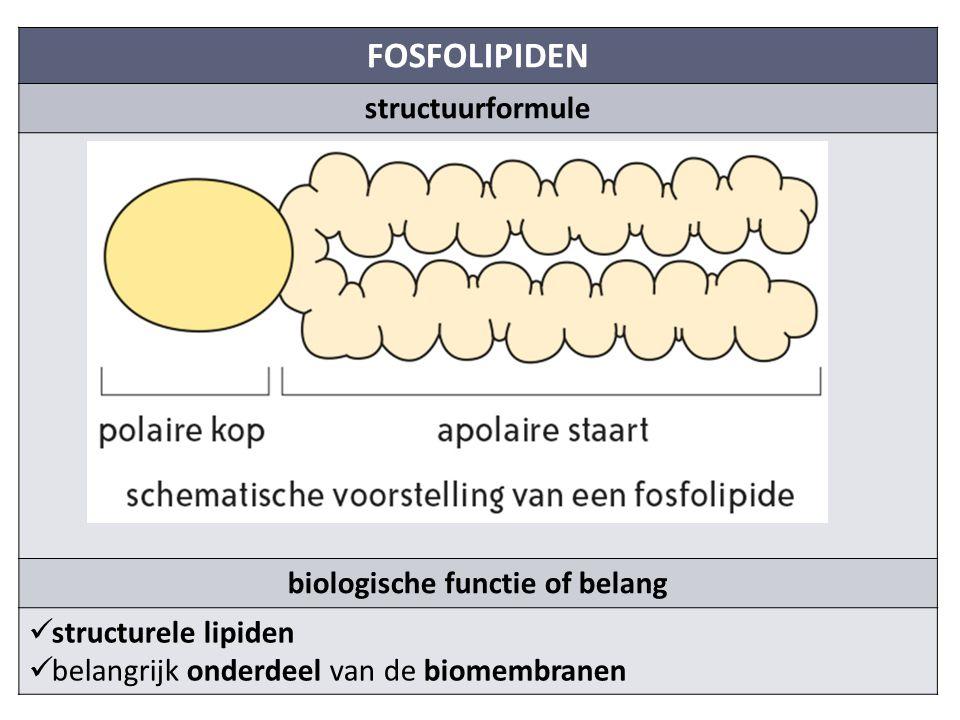 FOSFOLIPIDEN structuurformule biologische functie of belang structurele lipiden belangrijk onderdeel van de biomembranen