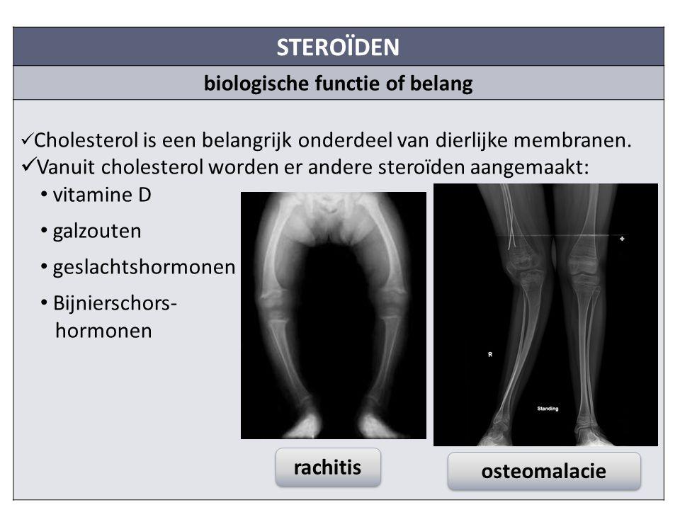 STEROÏDEN biologische functie of belang Cholesterol is een belangrijk onderdeel van dierlijke membranen.