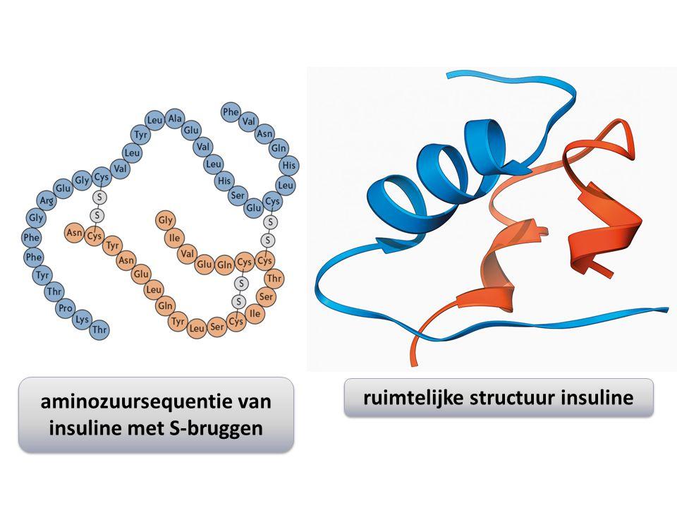 aminozuursequentie van insuline met S-bruggen aminozuursequentie van insuline met S-bruggen ruimtelijke structuur insuline