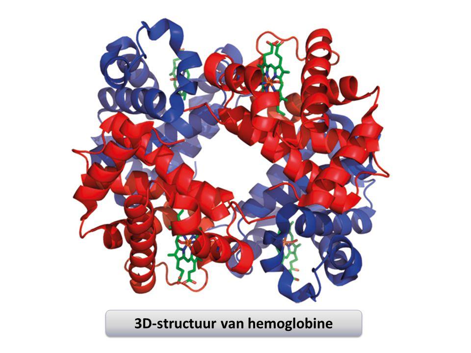 3D-structuur van hemoglobine