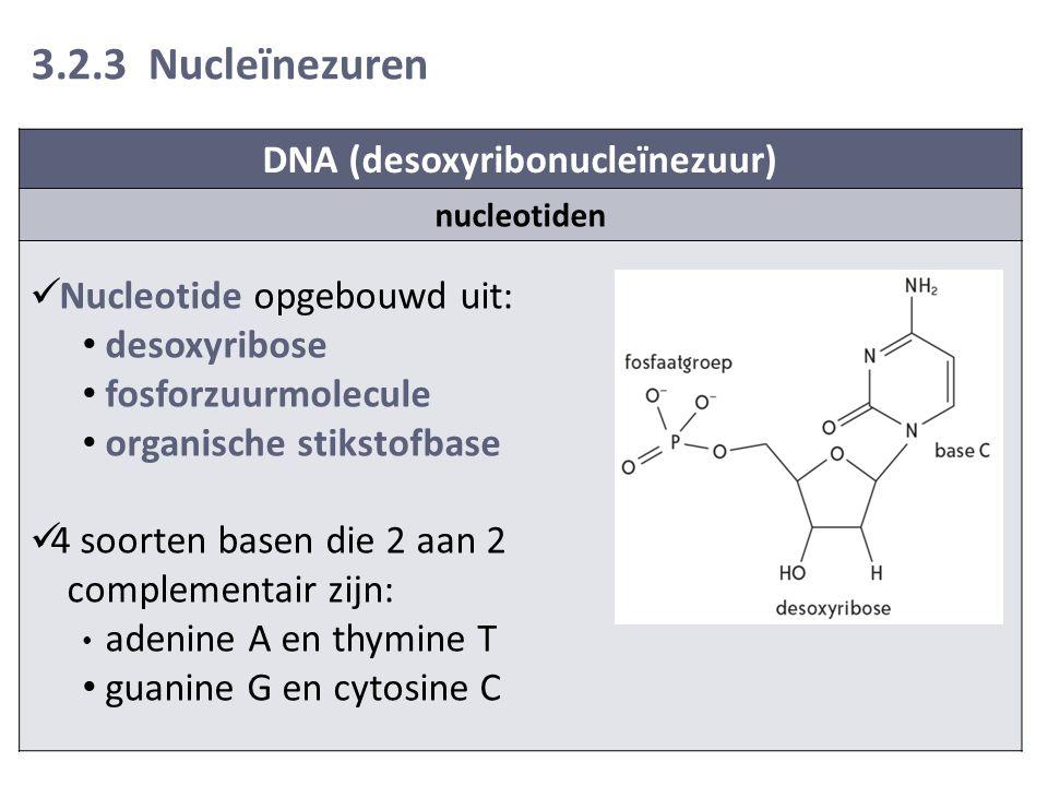 3.2.3 Nucleïnezuren DNA (desoxyribonucleïnezuur) nucleotiden Nucleotide opgebouwd uit: desoxyribose fosforzuurmolecule organische stikstofbase 4 soorten basen die 2 aan 2 complementair zijn: adenine A en thymine T guanine G en cytosine C
