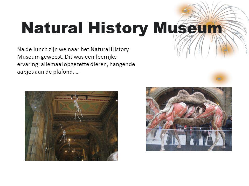 Natural History Museum Na de lunch zijn we naar het Natural History Museum geweest. Dit was een leerrijke ervaring: allemaal opgezette dieren, hangend