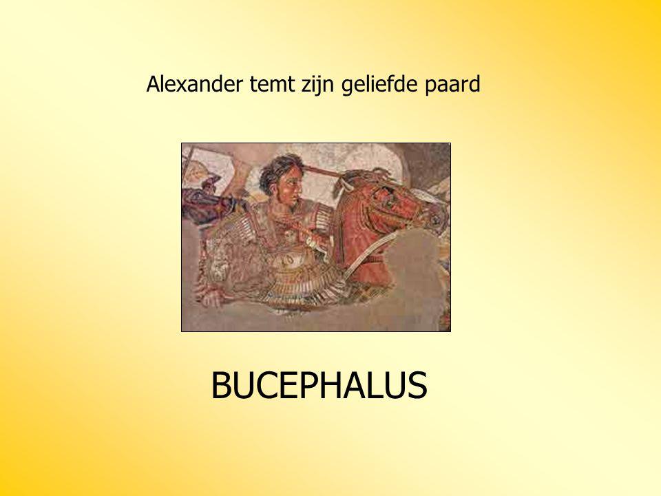 Alexander temt zijn geliefde paard BUCEPHALUS
