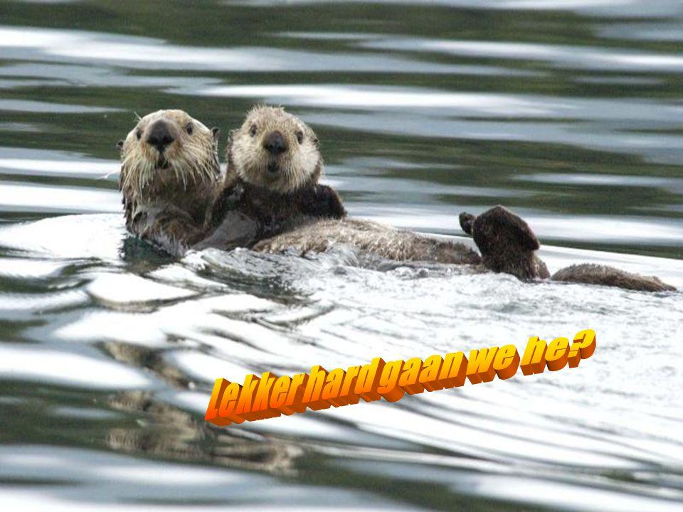 Je bent lief..zullen we gaan zwemmen?