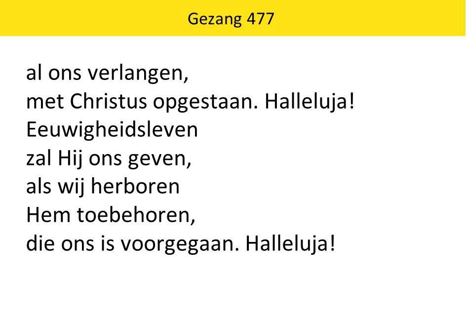 Gezang 477 al ons verlangen, met Christus opgestaan. Halleluja! Eeuwigheidsleven zal Hij ons geven, als wij herboren Hem toebehoren, die ons is voorge