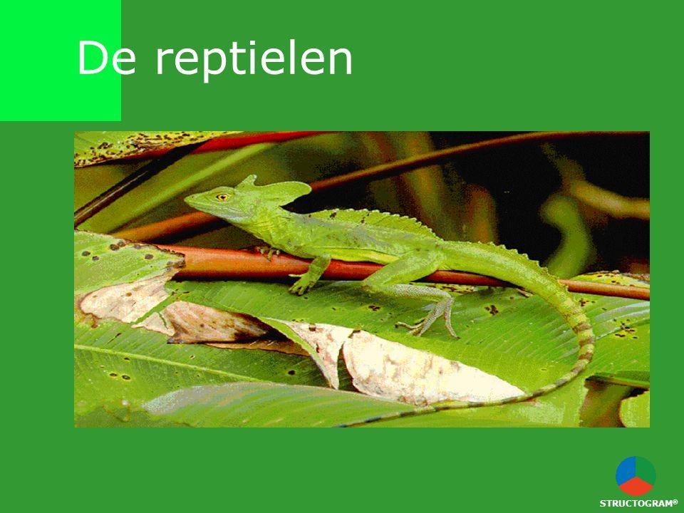 De reptielen