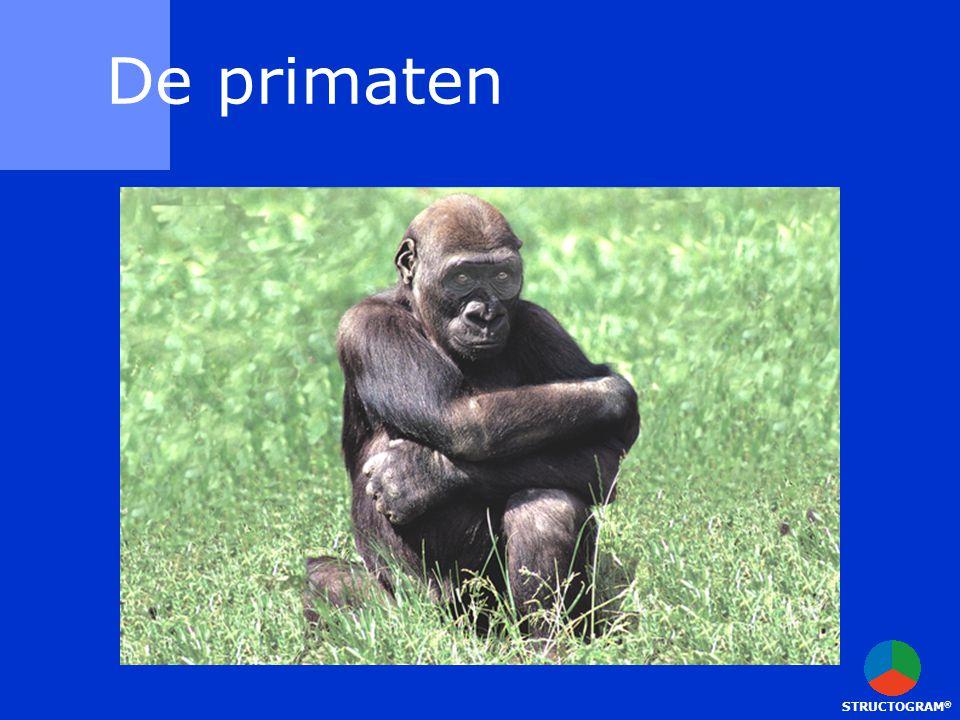 STRUCTOGRAM ® De primaten
