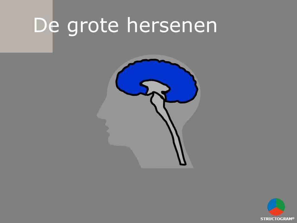 STRUCTOGRAM ® De grote hersenen
