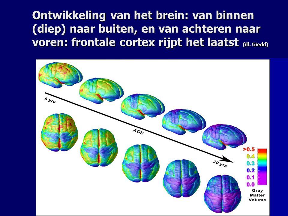 Ontwikkeling van het brein: van binnen (diep) naar buiten, en van achteren naar voren: frontale cortex rijpt het laatst (ill. Giedd)