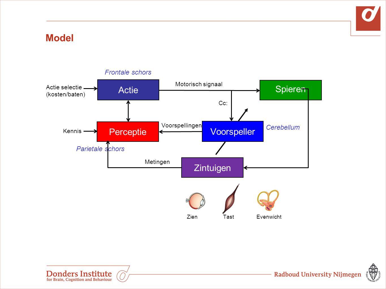 Model Actie Spieren Voorspeller Actie selectie (kosten/baten) Voorspellingen Frontale schors Parietale schors Cerebellum Zien Tast Evenwicht Perceptie