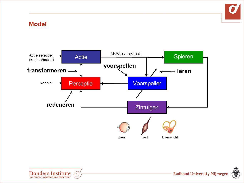 Model Actie Spieren Voorspeller Actie selectie (kosten/baten) Zien Tast Evenwicht Perceptie Motorisch signaal Zintuigen Kennis leren transformeren red
