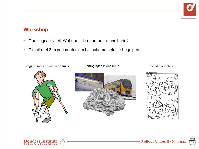 Workshop Openingsactiviteit: Wat doen de neuronen is ons brein? Circuit met 3 experimenten om het schema beter te begrijpen Omgaan met een nieuwe situ