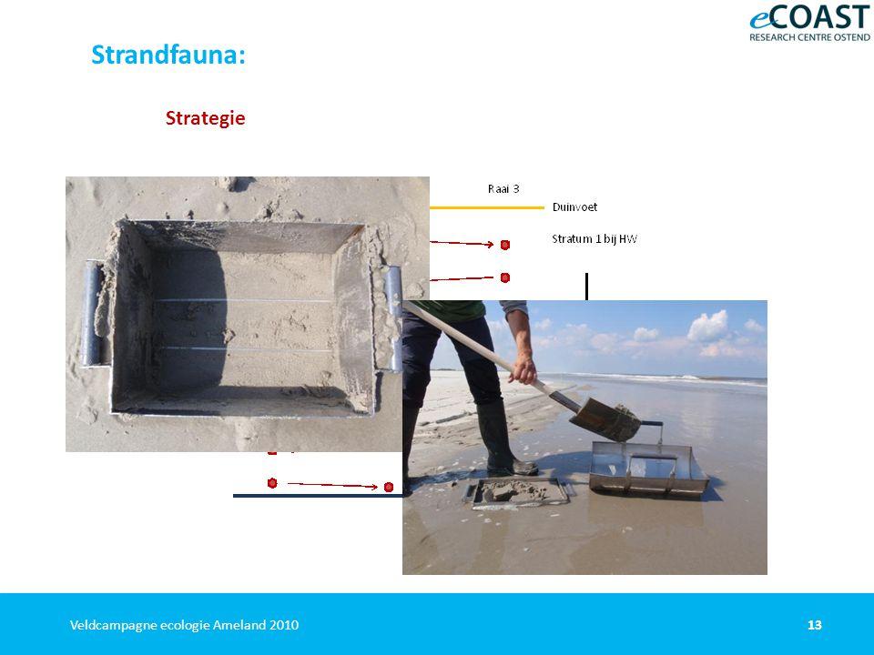 13Veldcampagne ecologie Ameland 2010 Strandfauna: Strategie