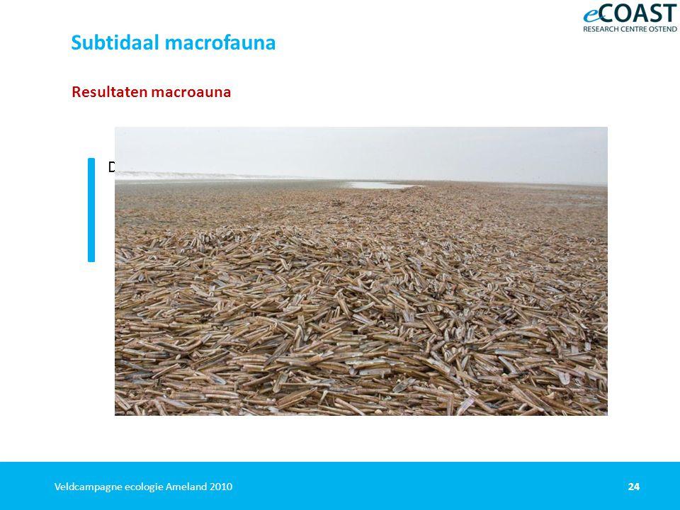 24Veldcampagne ecologie Ameland 2010 Resultaten macroauna Densiteit en vooral biomassa: lager bij Schiermonnikoog dan Ameland lager dan bij eerder onderzoek Subtidaal macrofauna Nauwelijks Ensis directus